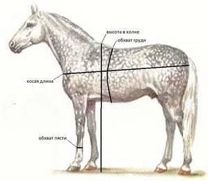 Сколько весит свинья, корова, лошадь, бык: эффективные методики определения без наличия весов