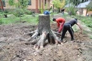 Что надо сделать чтобы дерево быстро засохло. чем полить дерево, чтобы оно быстро засохло? нанесение препаратов на листву дерева