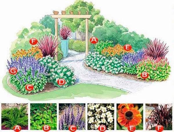 Схемы клумб непрерывного цветения из многолетников