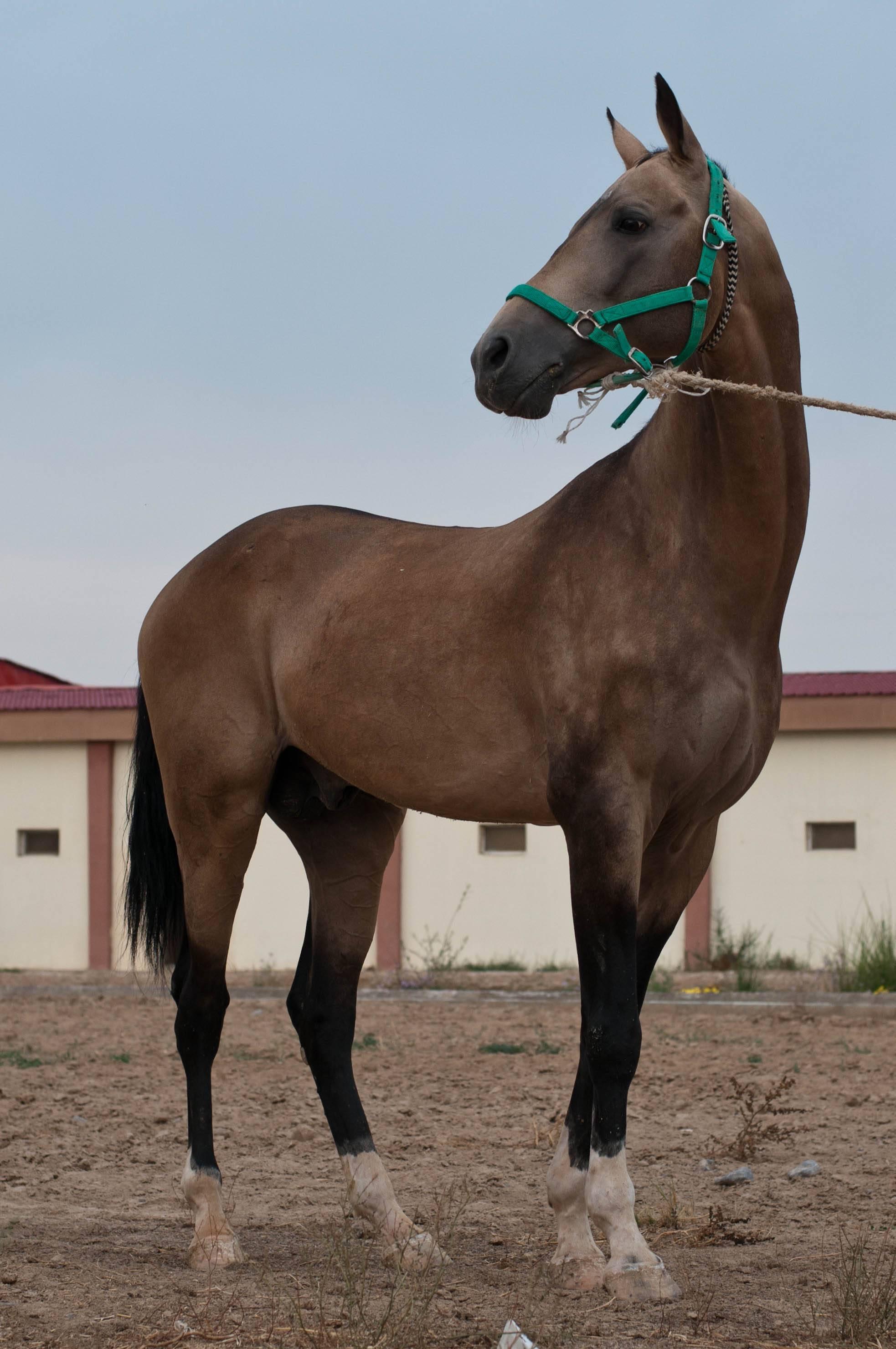 Масти лошадей:названия и фото