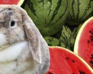 Можно ли давать кроликам арбузные корки