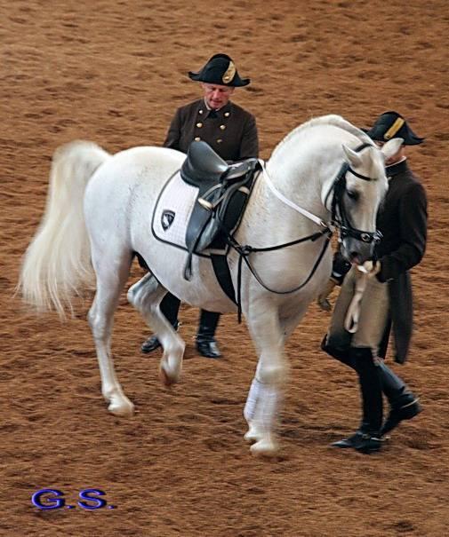 Мини-лошадь (27 фото): самая маленькая лошадь в мире. описание пород карликовых лошадок. выращивают ли миниатюрных коней на фермах?