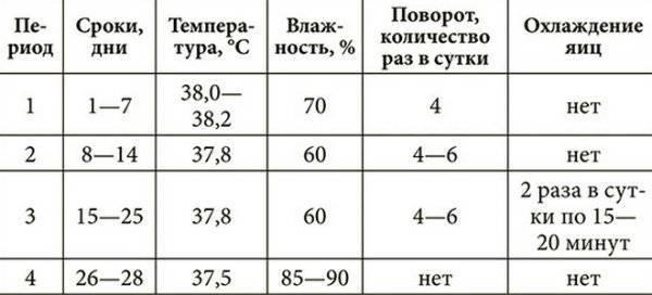 Инкубация куриных яиц: режим, таблица температуры и влажности, а также отличия в выращивании птенцов в механическом и пенопластовом устройствах