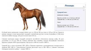 Вес лошади