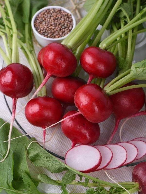 Чем подкормить редис после всходов и при наливе корнеплода — советы и рецепты