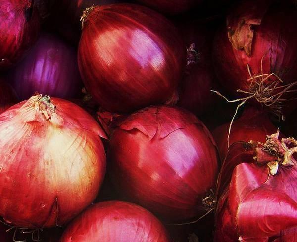 Фиолетовый лук: польза и вред, отличие от обычного