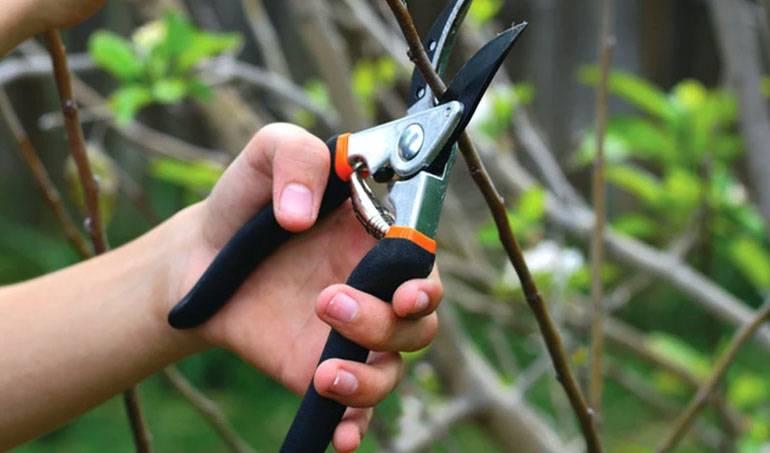 Март-2020: какие работы нужно выполнять в саду и огороде по лунному календарю, как организовать уход за рассадой, чтобы получить хороший урожай