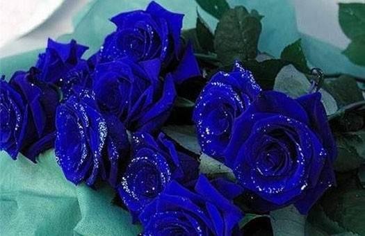Как получить в домашних условиях синие розы