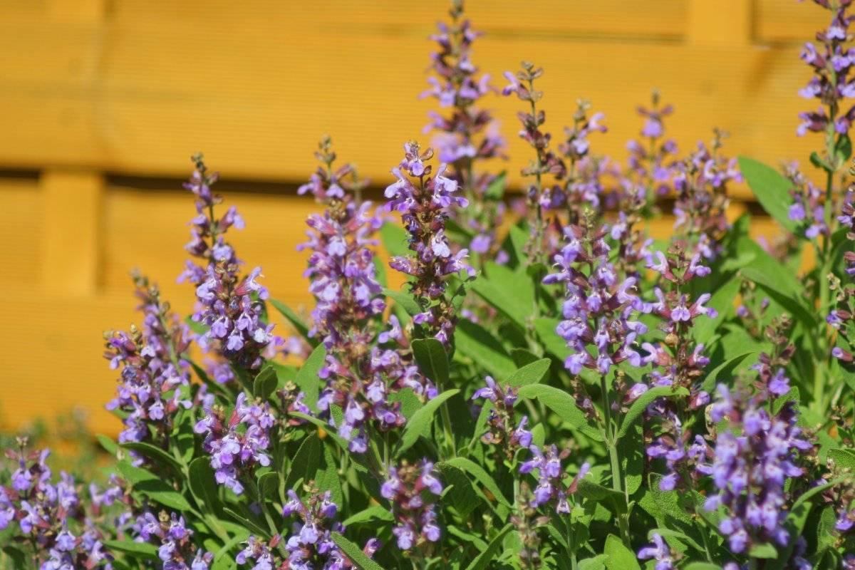 Цветы для зимних букетов: какие выбрать, когда срезать, как засушить