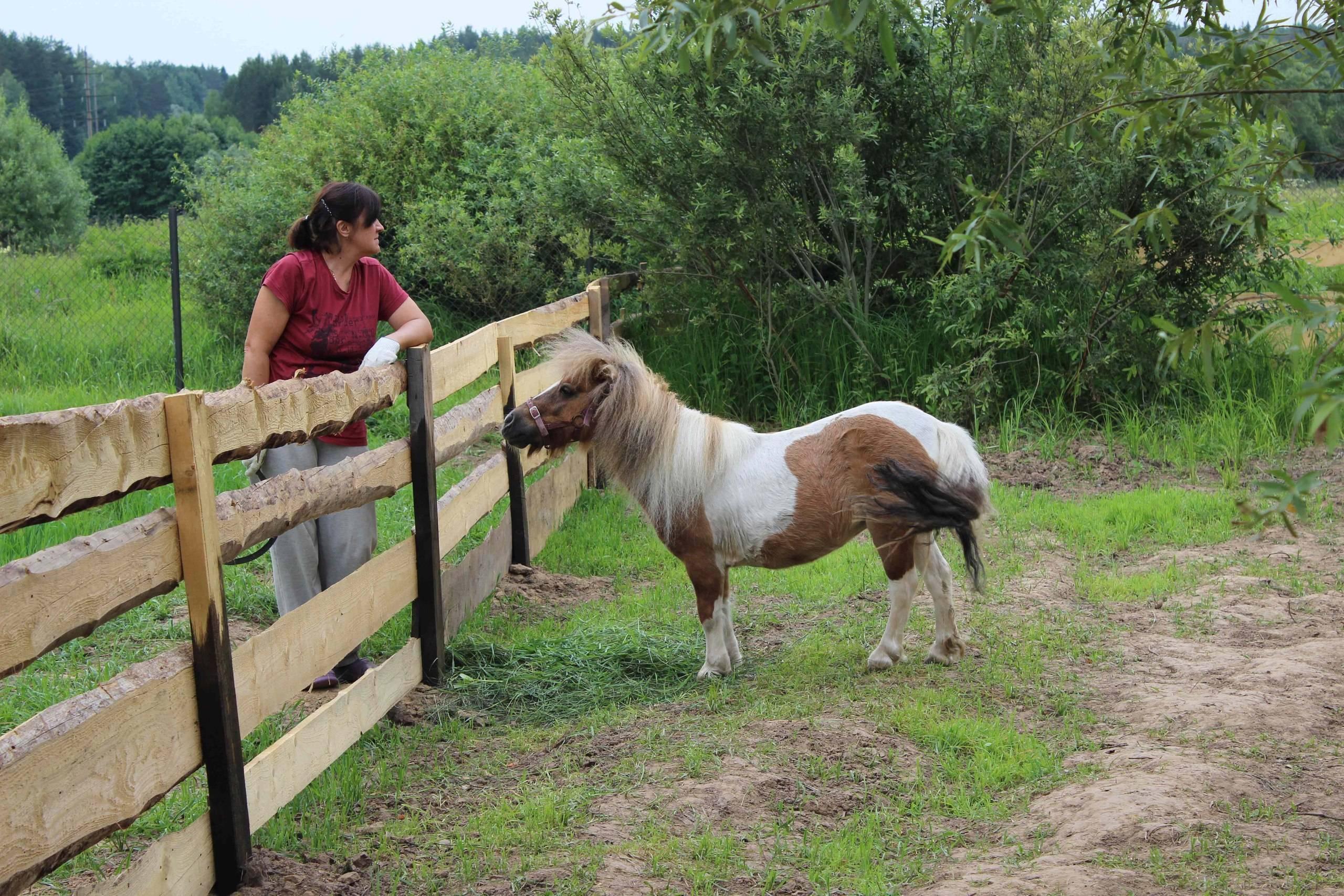 Фалабелла — самая маленькая порода мини-лошадей