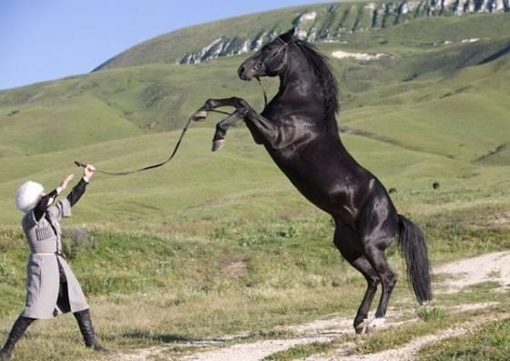 История карачаевской породы лошадей 2020