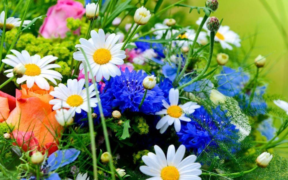 Первые весенние цветы: фото, названия и описания первоцветов - энциклопедия цветов