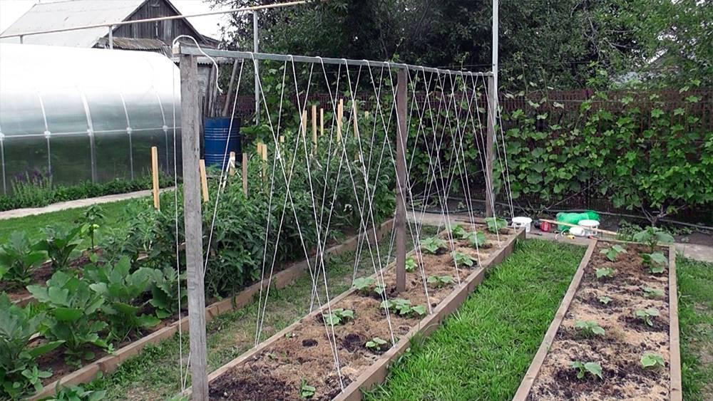 Огурцы на шпалере в открытом грунте — схема посадки, варианты выращивания и виды шпалер (105 фото и видео)