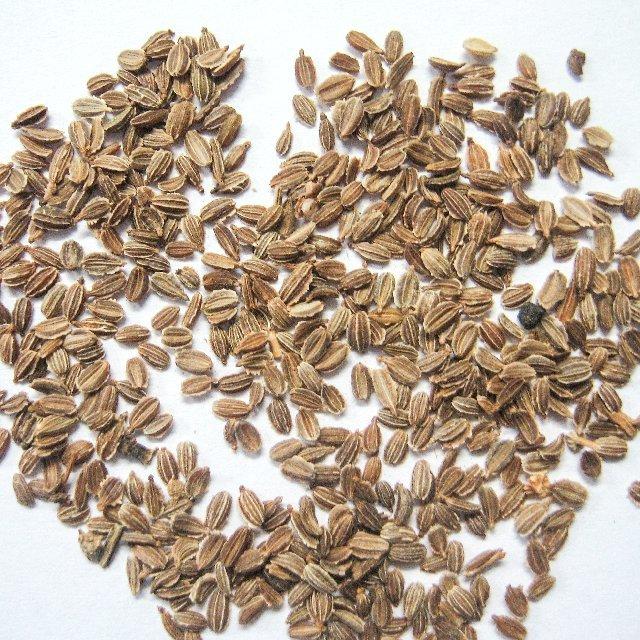 Семена свеклы: лучшие сорта для открытого грунта - обзор и подробное описание сортов!