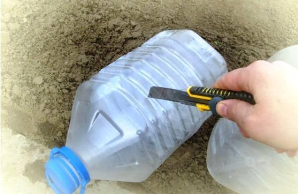 Как посадить и выращивать огурцы в 5 литровых бутылках