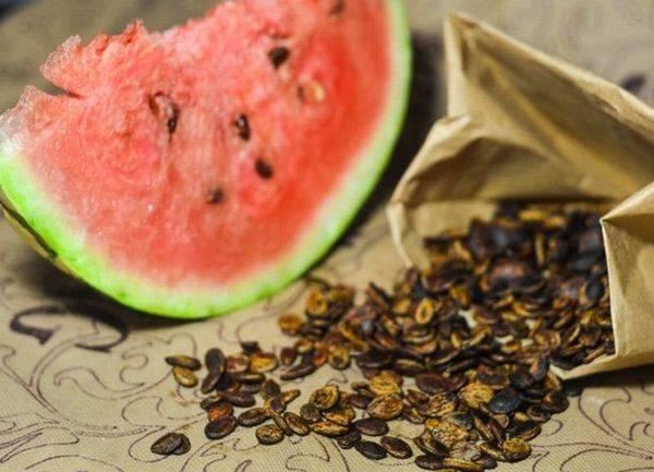 Подготовка семян к посеву: обзор комплекса всех необходимых предварительных процедур