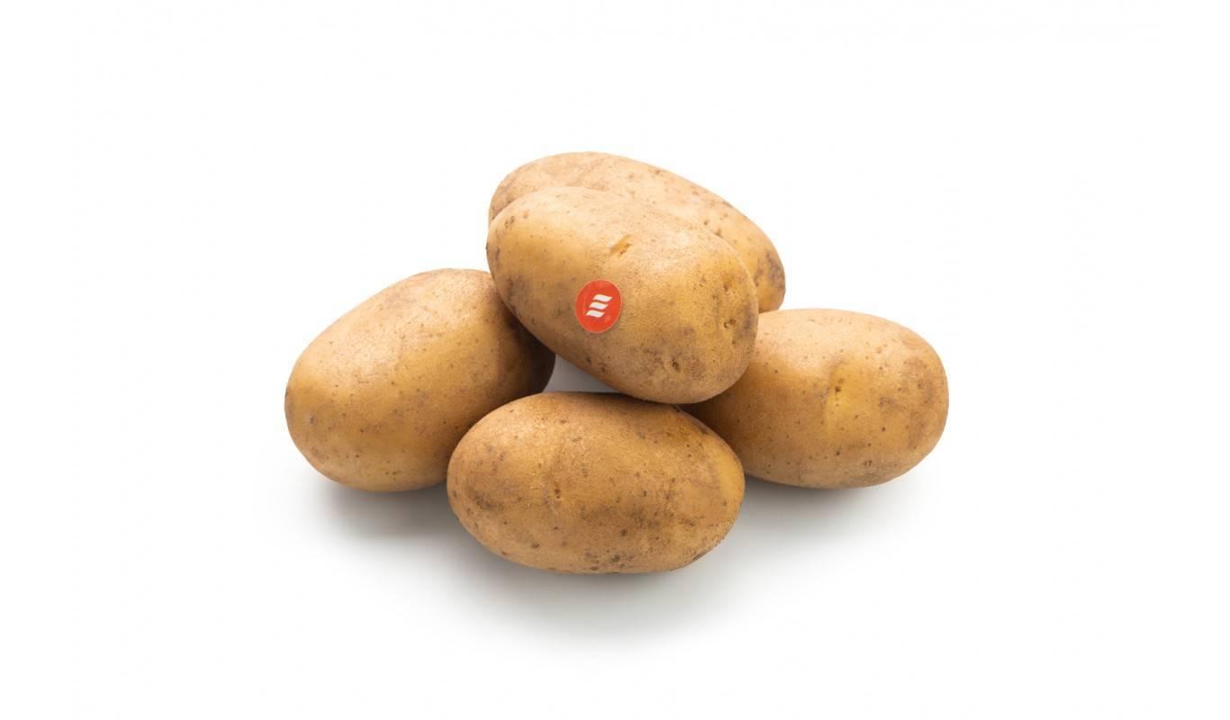 Картофель отрада: описание сорта, характеристики, достоинства, сроки и правила посадки, особенности агротехники, отзывы
