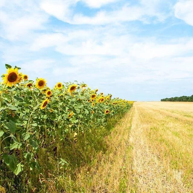 Использование календаря цветения медоносных растений