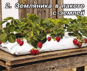 Здоровая и крепкая рассада огурцов: выращивание в домашних условиях, как правильно это сделать, правила ухода за молодыми растениями