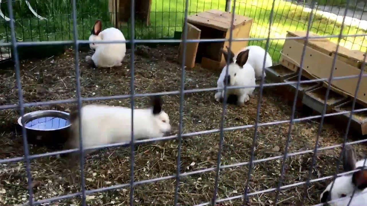 Вольерное содержание кроликов в домашних условиях