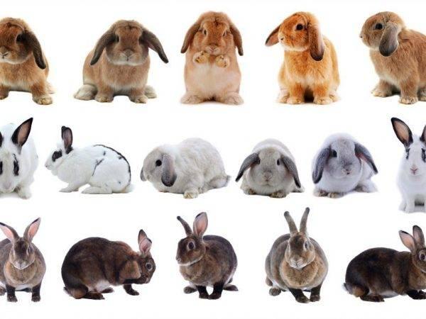 Породы кроликов — описание и характеристики пород, мясные, меховые, пуховые, особенности содержания