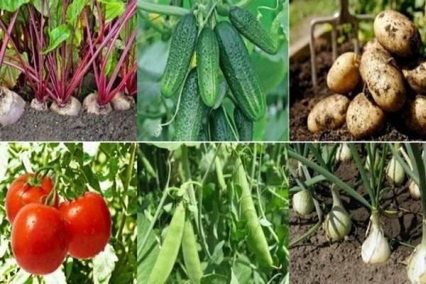 Что можно сажать после капусты: 4 группы огородных растений