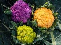 Выращивание цветной капусты: посадка и уход. лучшие сорта цветной капусты