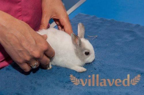Основные причины и лечение поноса у кроликов - общая информация - 2020