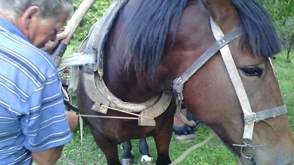 Как запрягать лошадь (с иллюстрациями) - wikihow