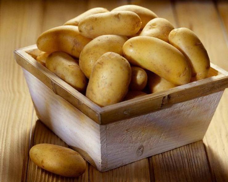 Подборка лучших сортов картофеля для сибири и урала