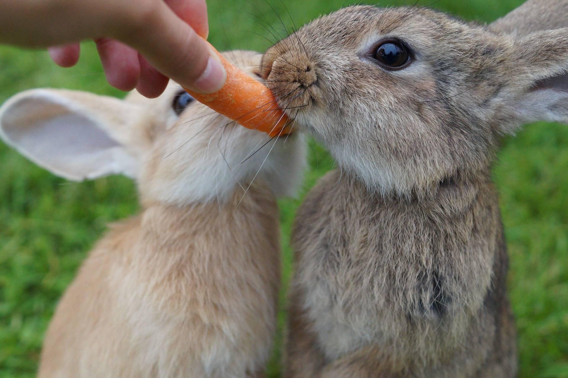 Почему кролики грызут клетки и что делать