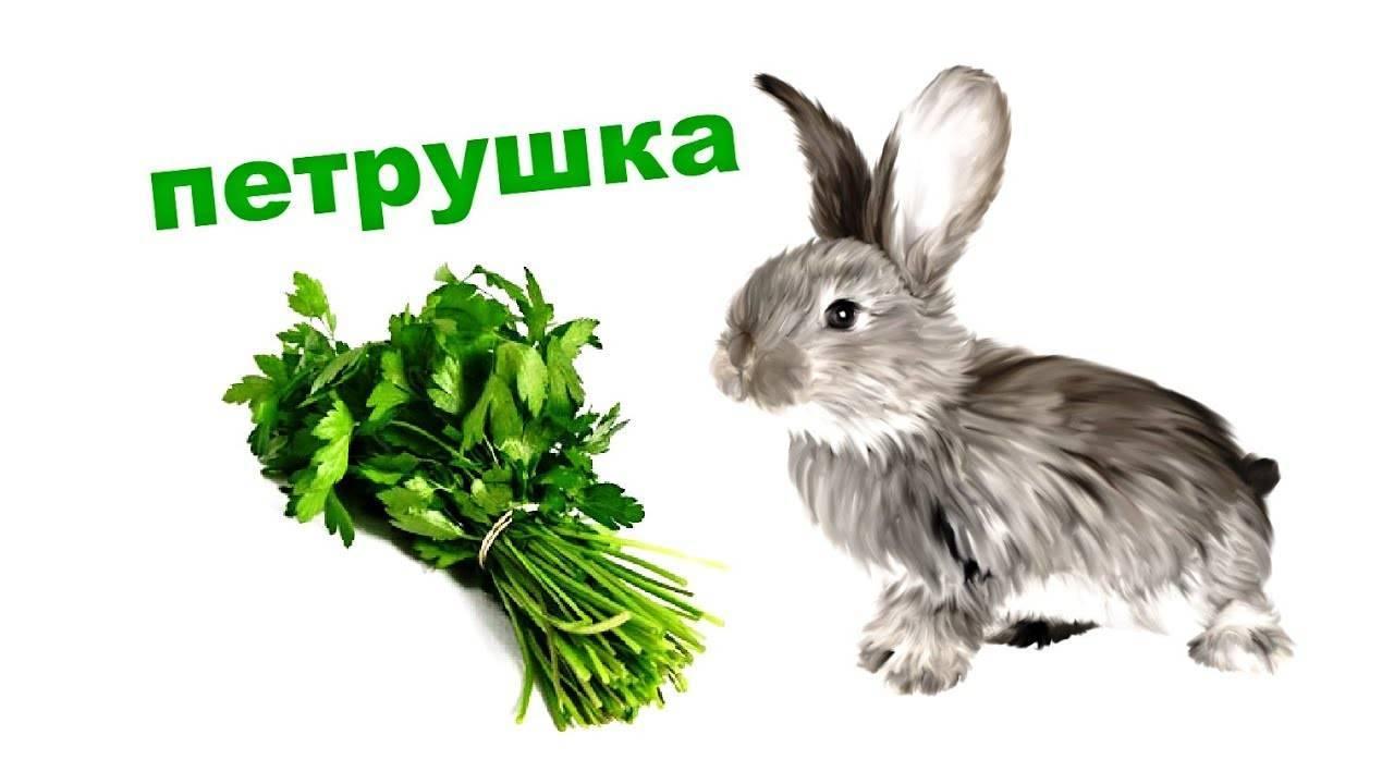Можно ли кормить кроликов сырой и вареной картошкой?