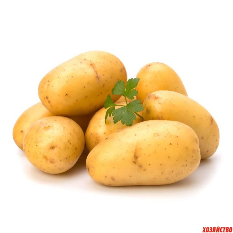 Картофель гранат описание сорта фото