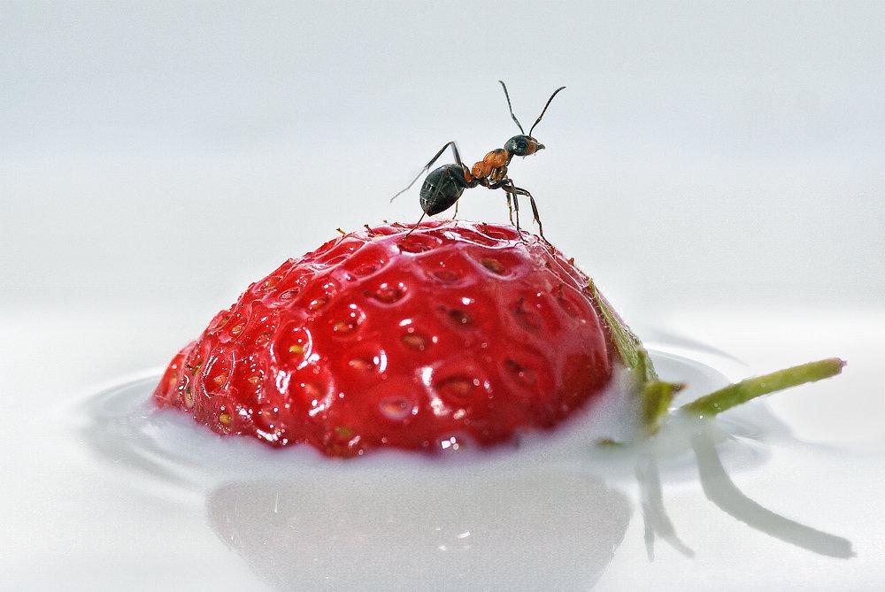Как избавиться от муравьев на огороде и в саду?