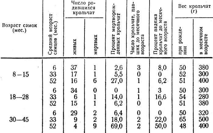 О весе кроликов по месяцам — таблица сколько весят разные популярные породы