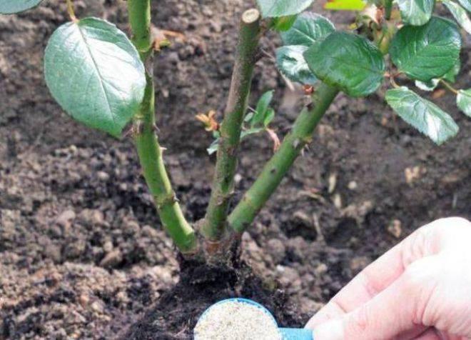 Как подкармливать растения дрожжами: рецепты для подкормки дрожжами домашних цветов и огородных растений