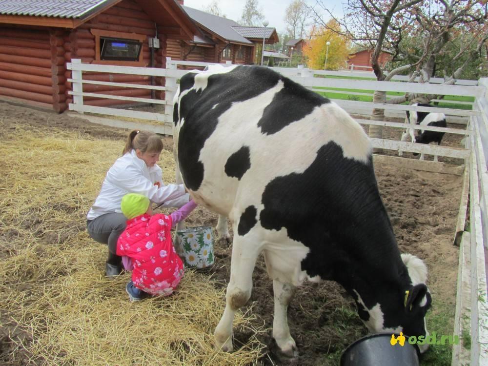 Аппарат для дойки: доильный аппарат варианты дойки коров
