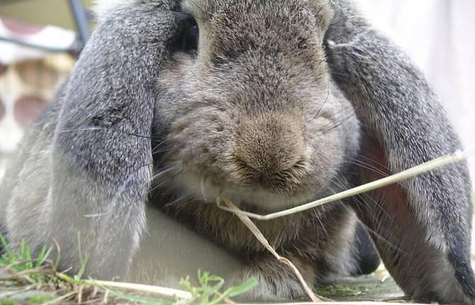 Каким болезням подвержены кролики и как их лечить