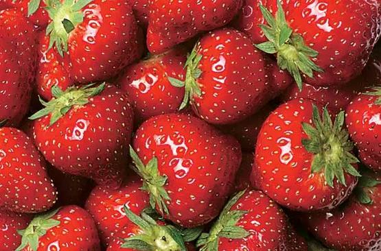 Клубника: польза и вред для здоровья ягод, листьев, корней