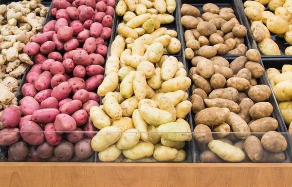 Семенной картофель – как правильно хранить, прорастить и подготовить к высадке?