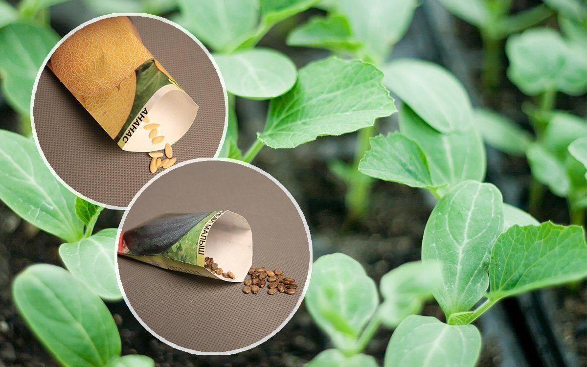Как правильно подготовить семена к посеву