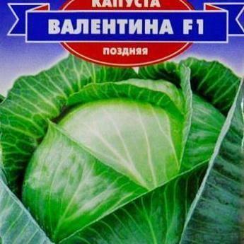 Капуста валентина f1 — урожайный гибрид