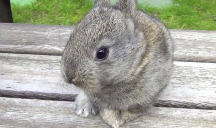 Он или она: учимся различать пол кролей