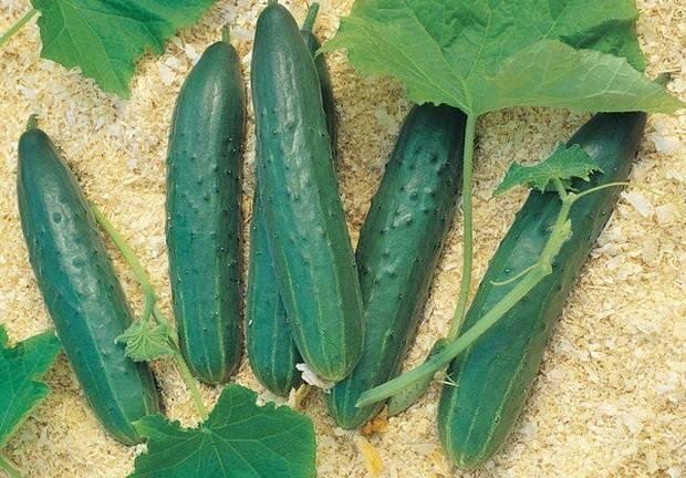 Сроки посева овощных культур на рассаду для различных регионов