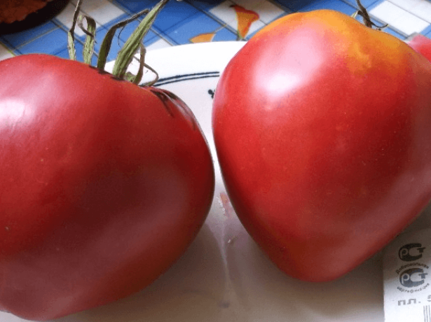 Сорта помидоров для выращивания в открытом грунте