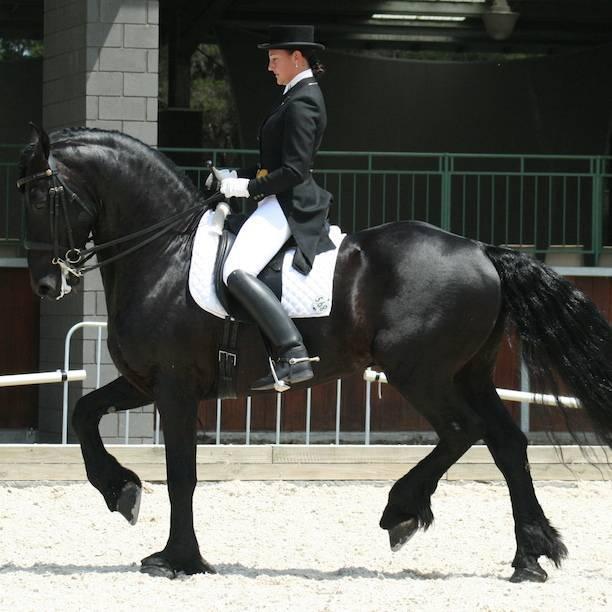 Лошадь-фриз, особенность породы