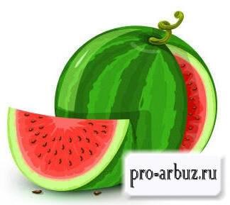 Арбуз и дыня — это ягоды или нет, и почему