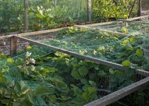 Как защитить урожай клубники от птиц?