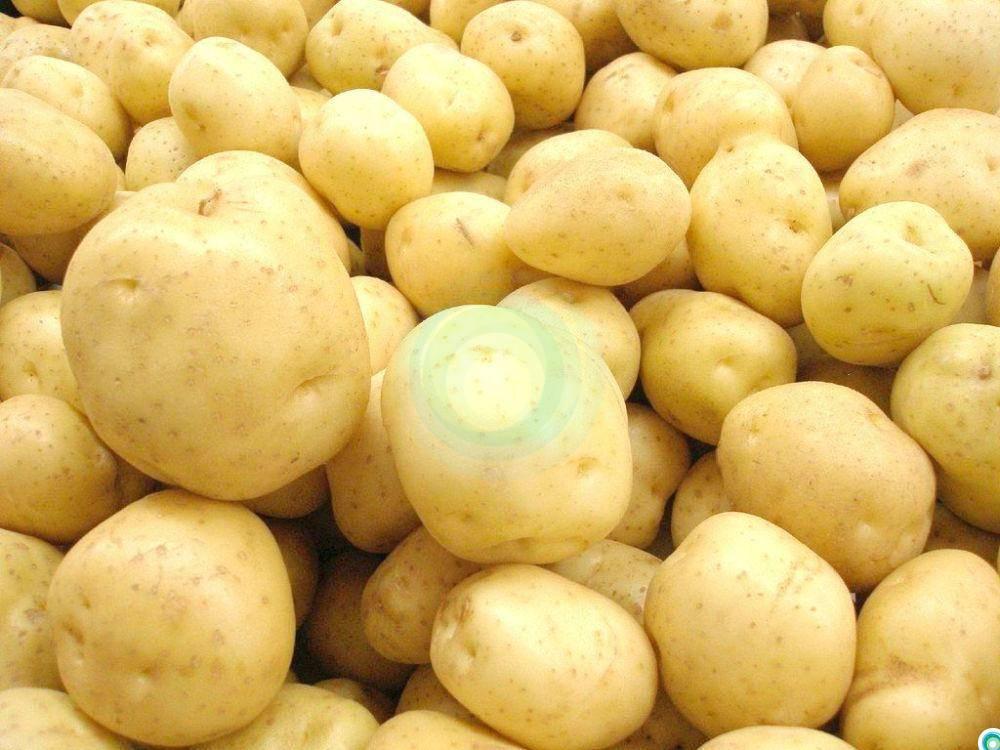 Картофель сорт елизавета. описание, происхождение и развитие