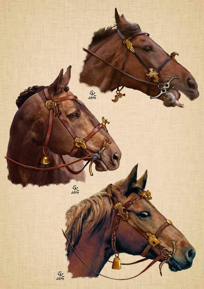Назначение, элементы и виды сбруи для лошадей